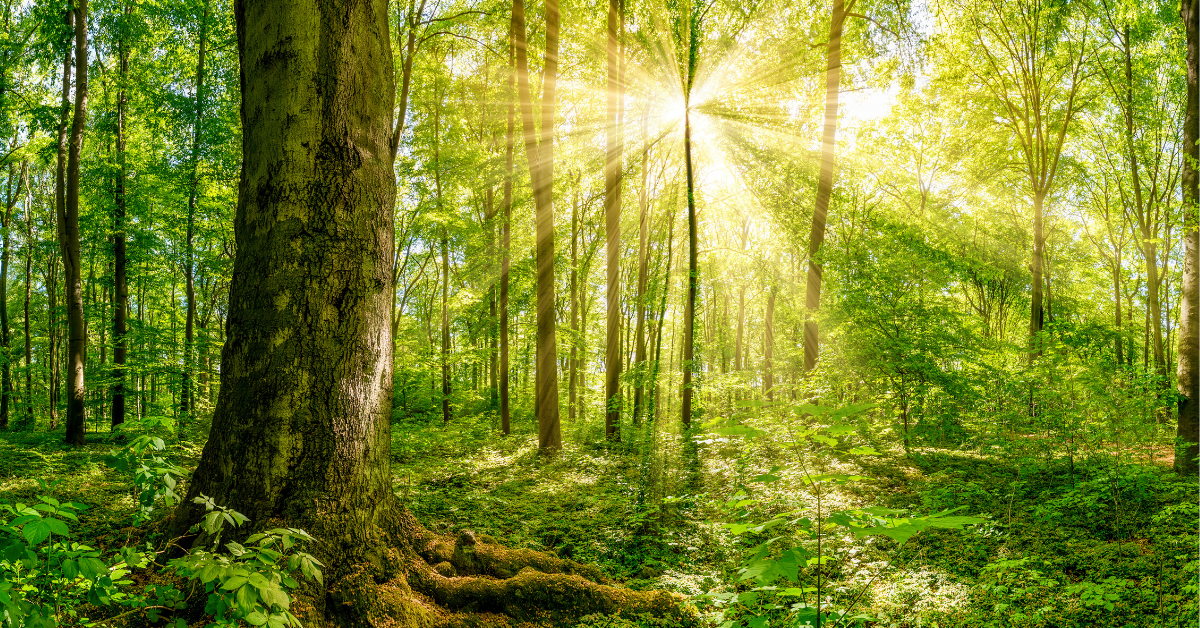 Why Trees Are Good For Your Health